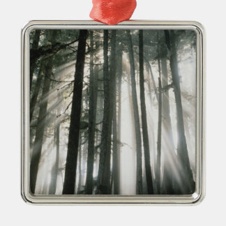 Sunbeams streaming through trees, Mount Rainier Silver-Colored Square Decoration