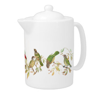 Sunbird Catbird Birds Wildlife Animals Teapot
