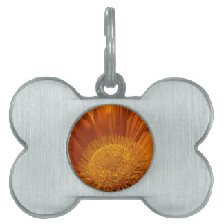 Sunburnt Orange Pet Name Tags