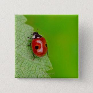Sunburst above tiny ladybird climbing up a fresh 15 cm square badge
