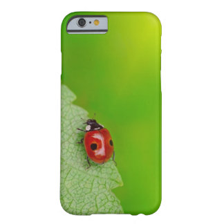 Sunburst above tiny ladybird climbing up a fresh barely there iPhone 6 case