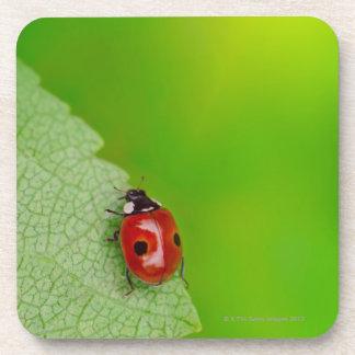Sunburst above tiny ladybird climbing up a fresh coaster
