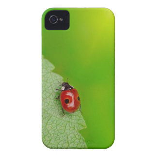 Sunburst above tiny ladybird climbing up a fresh iPhone 4 case
