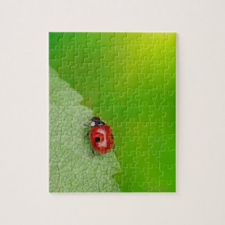 Sunburst above tiny ladybird climbing up a fresh jigsaw puzzle