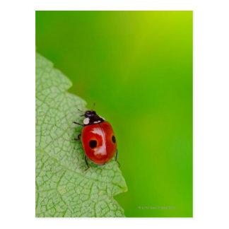 Sunburst above tiny ladybird climbing up a fresh postcard