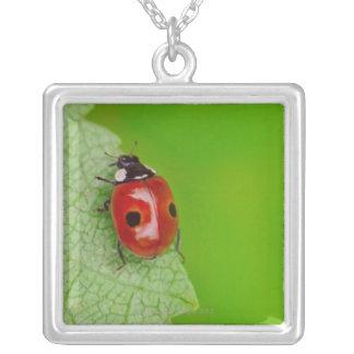 Sunburst above tiny ladybird climbing up a fresh silver plated necklace