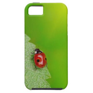 Sunburst above tiny ladybird climbing up a fresh tough iPhone 5 case