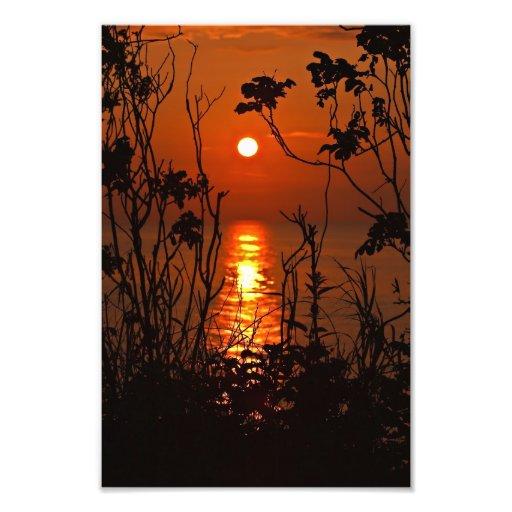 Sundown on the ocean with tree photo art