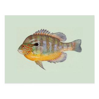 Sunfish by Duane Raver Postcard