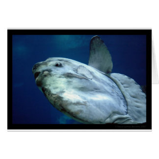 Sunfish Mola Mola 001 Greeting Card