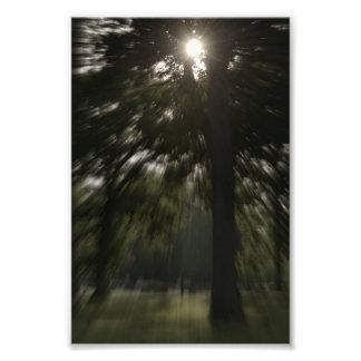 Sunflare through tree photo art