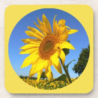 Sunflower 01.1.2rd, Field of Sunflowers Beverage Coaster