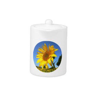 Sunflower 01.1rd, Field of Sunflowers