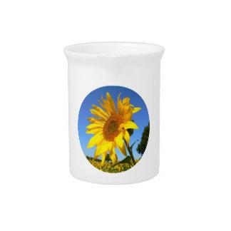 Sunflower 01.1rd, Field of Sunflowers Pitcher