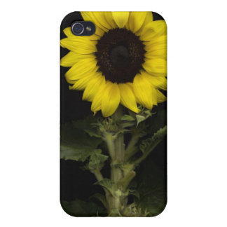 Sunflower 11 iPhone 4/4S covers