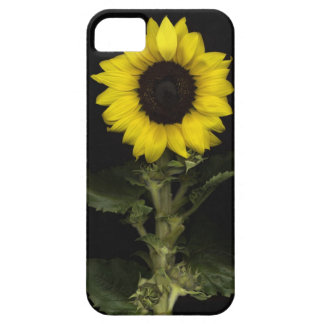 Sunflower 11 iPhone 5 covers