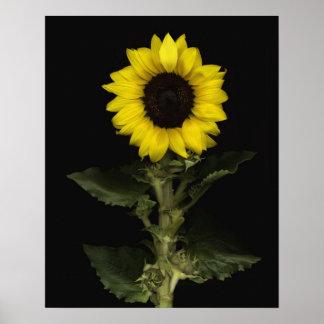 Sunflower 11 poster