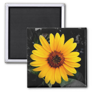 Sunflower 2 square magnet