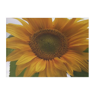 Sunflower Acrylic Wall Photo Acrylic Wall Art