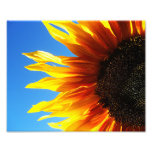 Sunflower Aflame 10x8