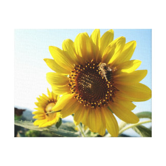 Sunflower and bee canvas canvas print