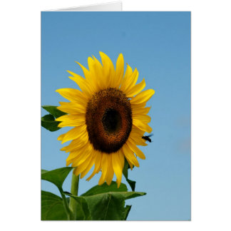 Sunflower and Bee Greeting Cards