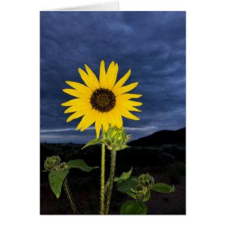 Sunflower and Dark Blue Sky Card
