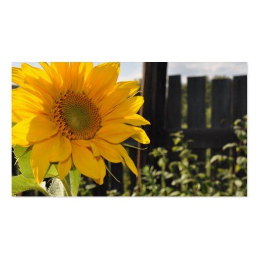 Sunflower and Fence Business Card