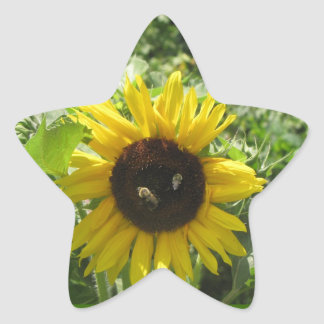 Sunflower and Honey Bees Bumble Bees Star Sticker