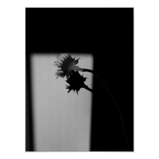 Sunflower and Shadow - Black and White Photograph Poster