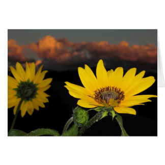 Sunflower at Dusk Card