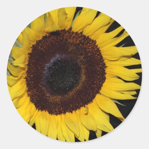 Sunflower Beauty Sticker
