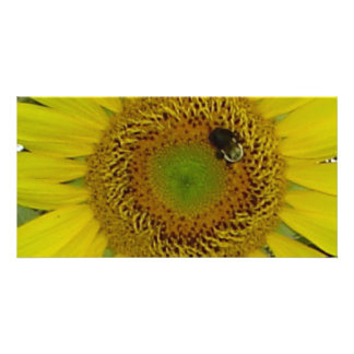 Sunflower Bee Pretty Customised Photo Card