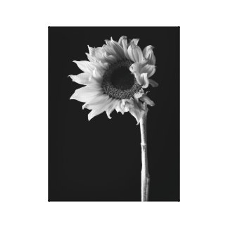 Sunflower - Black and White Photograph Canvas Print