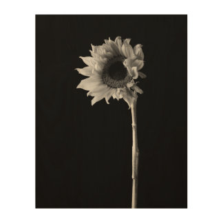 Sunflower - Black and White Photograph Wood Print