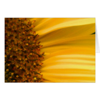 Sunflower Blank Greeting Card