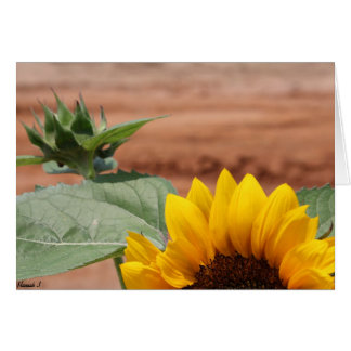 Sunflower Bloom Card