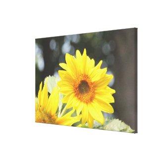 Sunflower Blooms Canvas Print