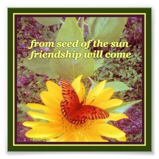 Sunflower Butterfly Friendship Seeds Photo