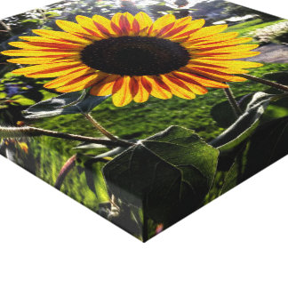 Sunflower canvas canvas print