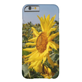 Sunflower Case for Iphone 6/6s