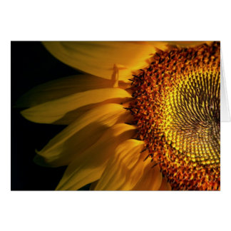 Sunflower Close-up Greeting Card