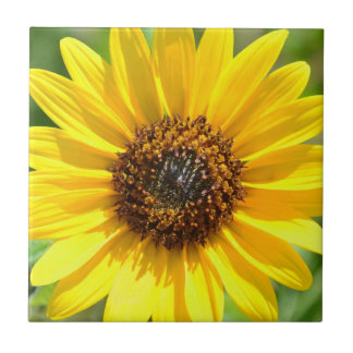 Sunflower Close Up tile