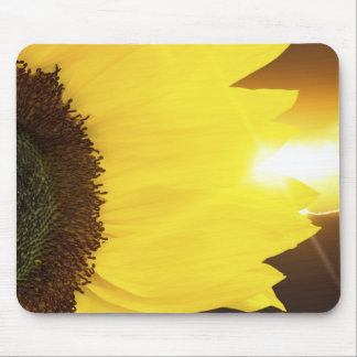 Sunflower closeup and sunset lighting mouse mat