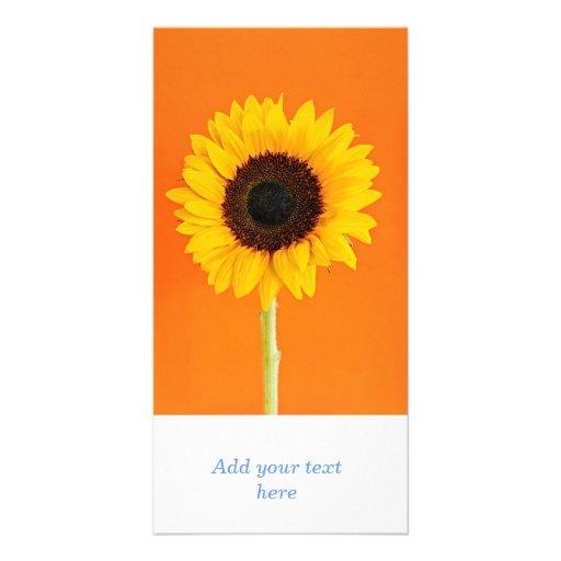 Sunflower closeup photo greeting card