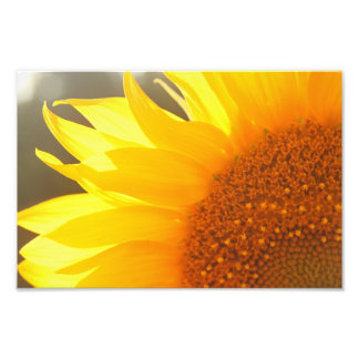 Sunflower Closeup Photo Print