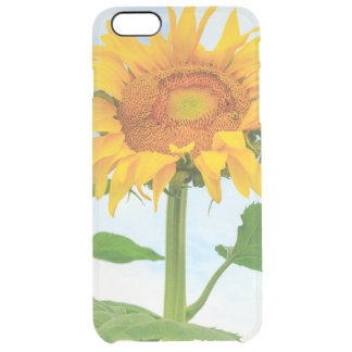 Sunflower, community garden, Moses Lake, WA, USA Clear iPhone 6 Plus Case