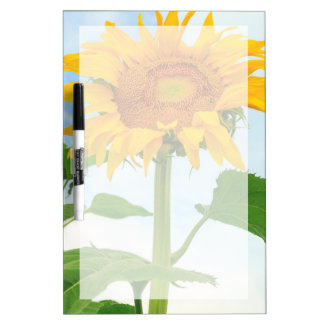 Sunflower, community garden, Moses Lake, WA, USA Dry Erase Board