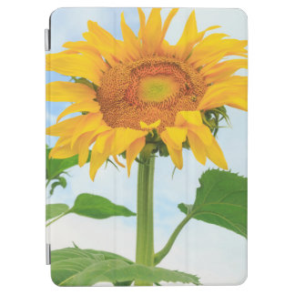Sunflower, community garden, Moses Lake, WA, USA iPad Air Cover