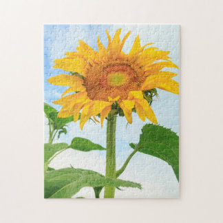 Sunflower, community garden, Moses Lake, WA, USA Jigsaw Puzzle
